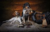 pic of ammo  - Hunting dog with trophies woodcock - JPG