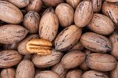 stock photo of pecan tree  - Pecan nuts in and out of shells - JPG