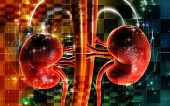 picture of human kidneys  - Digital illustration of kidney in colour background - JPG