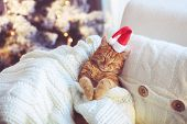 stock photo of lovable  - Lovable ginger cat wearing Santa Claus hat sleeping on chair under Christmas tree at home - JPG
