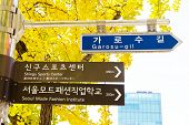 foto of tree lined street  - Garosugil Street Sign - JPG