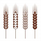 stock photo of ear  - Wheat ear icon set - JPG