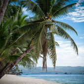 picture of boracay  - Tropical beach with beautiful palms and white sand Philippines Boracay Island - JPG