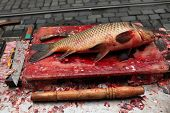 foto of kill  - Fresh killed carp  - JPG