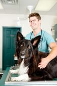Large Dog At Small Animcal Clinic