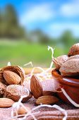 picture of shells  - Group of healthy almonds in shell and shelled exposed on a wooden table in the field vertical composition - JPG