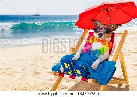 Dog Siesta On Beach Chair