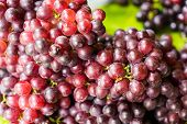 Bunches Of Fresh Ripe Red Grapes, Red Wine Grapes Background poster