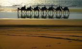 foto of desert animal  - This was a group of tourists on a sunset camel ride - JPG