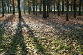 pic of fall leaves  - Shadows on green with autumn leaves - JPG