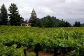 Wine Country Real Estate_filtered
