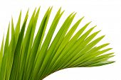 stock photo of tree leaves  - green leaf of palm tree - JPG