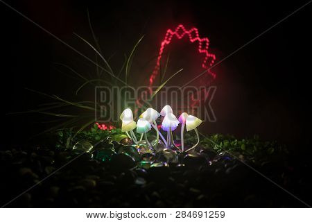 Fantasy Glowing Mushrooms In Mystery