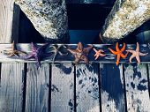 A Diverse Group Of Colorful Starfish Lined Up Along The Docks Of Comox, British Columbia, Canada. poster