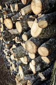 Stacks Of Firewood. Pile Of Firewood. Firewood Background poster
