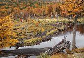 picture of tierra  - Beaver dam in Tierra del Fuego National Park near Ushuaia Argentina - JPG