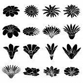 Detailed Flower Icons Set. Simple Illustration Of 16 Detailed Flower Icons For Web poster