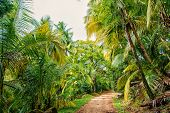 Jungle, Rainforest, Forest. Path In Jungle Of Devils Island, French Guinea.palm Trees With Green Lea poster
