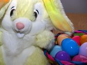stock photo of easter bunnies  - easter bunny with easter eggs  - JPG