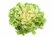 stock photo of escarole  - salad Escarole endive in front of white background - JPG