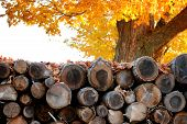 Woodpile In Autumn poster