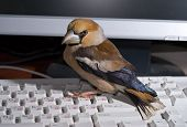 Keyboard And Bird