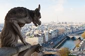 stock photo of gargoyles  - Notre Dame of Paris - JPG
