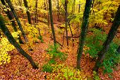 stock photo of illinois  - Beautiful autumn landscape at Rock Cut State Park in northern Illinois - JPG
