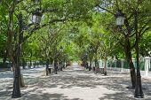 stock photo of tree lined street  - Tree lined avenue Paseo de la Princesa in San Juan Puerto Rico - JPG