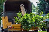 pic of arborist  - Wood Chipper Shredding a Tree into a Truck - JPG