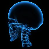 pic of mandible  - The human skull is a bony structure - JPG