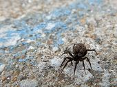 stock photo of baby spider  - A mother spider with babies on it on cement - JPG