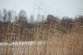 picture of windy weather  - the winter cold Sedge  windy weather close to - JPG