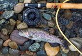 stock photo of trout fishing  - Top view of a single native wild trout next to fishing reel landing net and pole on wet river bed stones - JPG