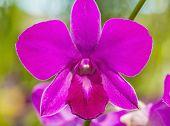 foto of orquidea  - Close - JPG