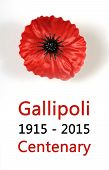 foto of tribute  - Australian Gallipoli Centenary WWI April 1915 tribute with red poppy lapel pin badge on white background with sample text - JPG