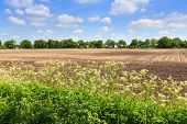 foto of weed  - Countryside landscape with weed and cultivated farm field in Holland - JPG
