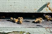 stock photo of bee-hive  - Bees enter a beekeeping hive through a slit in a stack of wooden boxes - JPG