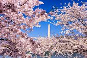 stock photo of washington monument  - Washington - JPG