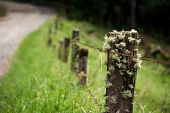picture of epiphyte  - Epiphytes on fence post in Costa Rica - JPG