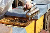 foto of honey bee hive  - bee keeper is smoking a bee hive - JPG