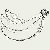 stock photo of bunch bananas  - Bunch of bananas - JPG