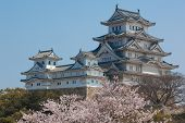 image of kinky  - Landscape view of the main tower of Himeji Castle on the hillside during the daytime with bonsai pine trees of the castle gardens in the foreground and blue sky in the background - JPG