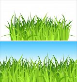 two grass backgrounds / vector / Contains the separated layers