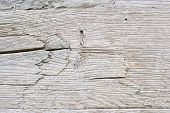 Old White Oak Wood For Background Or Old Grey Wooden Texture. Old Oak For Vintage Table Or Furniture poster