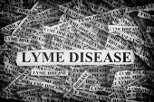 Lyme Disease. Torn Pieces Of Paper With The Words Lyme Disease. Concept Image. Black And White. Clos poster