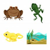 Vector Design Of Frog And Anuran Icon. Set Of Frog And Animal Vector Icon For Stock. poster