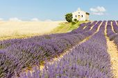 chapel with lavender and grain fields, Plateau de Valensole, Provence, France