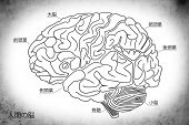 foto of temporal lobe  - The Human Brain Structure in Japanese Anatomy Medical Concept Hand drawn design - JPG