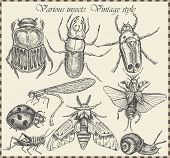 picture of hopper  - vector set insects in vintage style - JPG